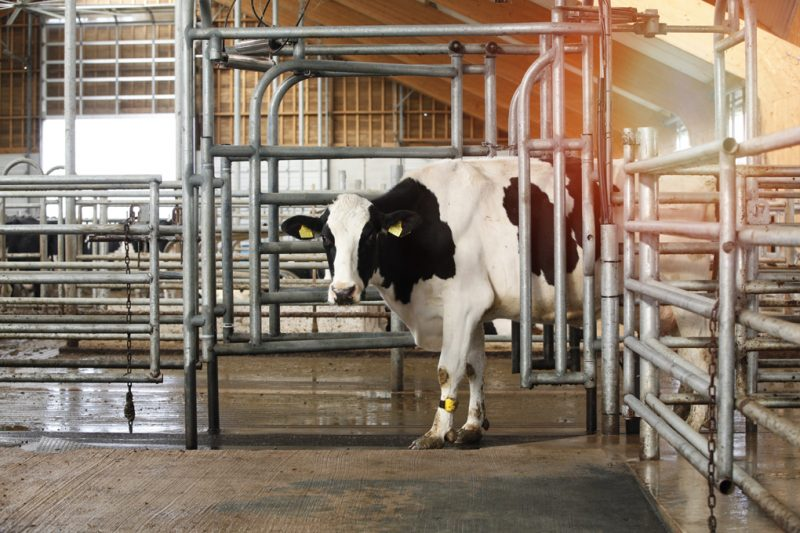 Cow Sorting and Routing